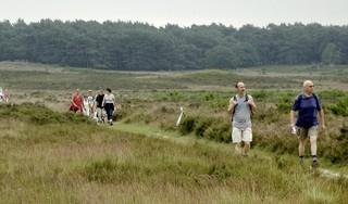 Weer geen wandelvierdaagse, maar wel vier dagen lopen door het Gooi. Organisatie zet dagroutes online