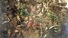 Opstanden, bloedvergieten en heldenmoed: burgemeesters richten de schijnwerper op oorlogsjaar 1572. 'Het begin van Nederland als zelfstandige staat'
