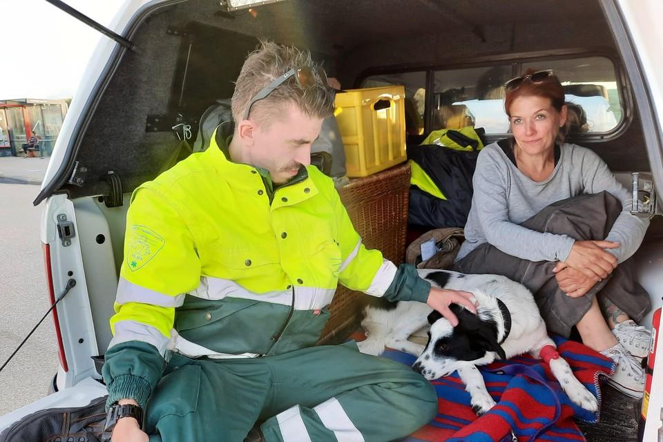 Een medewerker van Dierenambulance Velsen ontfermt zich over de gewonde hond Gismo.