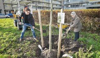 Misschien wel de meest besproken nieuwe bomen van de stad: 82 exemplaren erbij in Schalkwijk