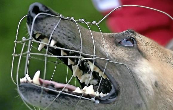 Hond Kobe uit Hoofddorp moet met muilkorf de straat op