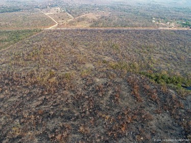 Demonstraties tegen branden in Amazone