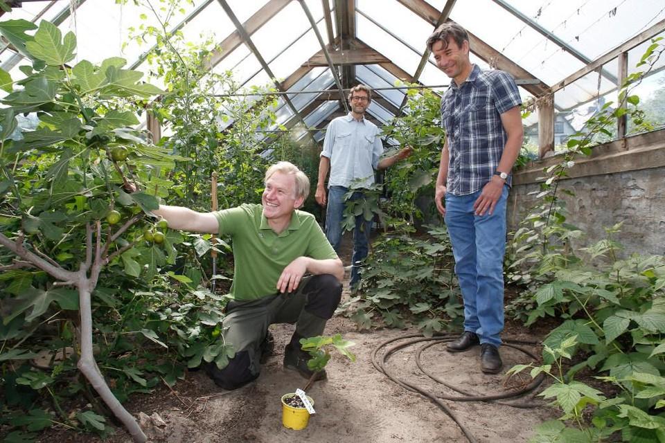 Göran Christiansson (voorop)in de kas met zijn Bomenplanters, Marcel van Dorst en Wim Kok (achterin).