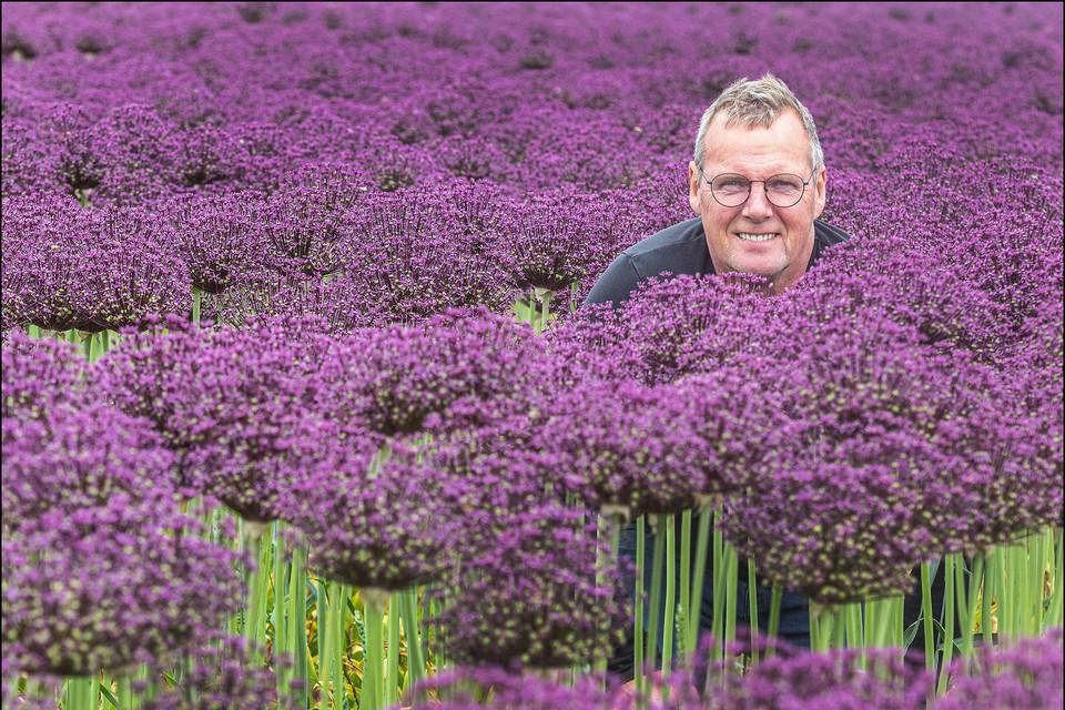 Kweker Piet Zonneveld tussen de alliumbollen.