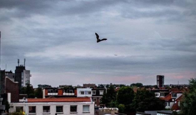 60 seconden: Vleermuis is terug! [video]
