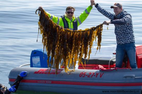 De belofte van zeewier als eiwitbron van de toekomst