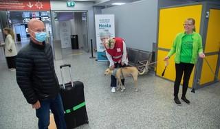 Pandemie in Finland versnelt, luchthaven zet coronahonden in