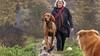 Hondenuitlaatservices nu bijna nergens meer welkom; hoop gevestigd op grote hondenspeeltuin