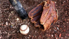 Beoogde fusiedatum van 1 oktober 2021 gaat niet lukken voor honkballers en softballers van Kinheim en DSS