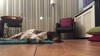 Hondenbelasting:'Kees was mijn officiële hond' | Column