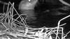 Geboorte van jonge ottertjes is het ultieme 'oké-stempel' van Moeder Natuur, vindt Naardermeer-boswachter Luc Hoogenstein; 'Maar waar ze zitten? We hebben echt geen idee'
