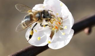 Honing of suiker: het maakt niet uit