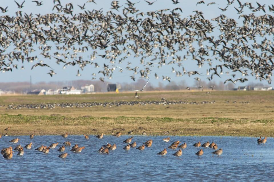 Vogelparadijs Eemland, waar elk voorjaar duizenden vogels uit het ei komen.