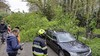 Boom valt op twee geparkeerde auto's in Bloemendaal, één van de twee voertuigen heeft forse schade