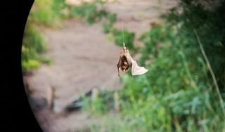Geslaagde reddingsactie vader en dochter in Hilversum; Vleermuis hing aan vishaak boven vijver op Anna's Hoeve