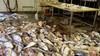 'Alsof er vijftig jaar niet is schoongemaakt' bij gesloten visverwerkingsbedrijf. Opgestapelde vis, smerige gereedschappen en ranzige tegeltjes