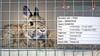 Topdrukte in dierenpensions: 'Een vrijwilliger heeft zelfs veertien konijnen in zijn tuin opgevangen'