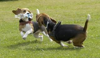 Rond Huizen dreigt vergiftigingsgevaar voor honden; In een week tijd al meerdere dieren plotseling overleden