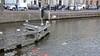Oeps! Handrem vergeten: auto rolt Spaarne in Haarlem in terwijl bestuurder pizza's afhaalt