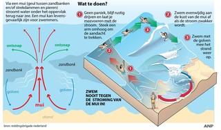 Muien langs hele kust dit jaar gevaarlijker. 'Je kunt er je vinger niet op leggen waarom'