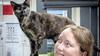 Katten bij het Kerbert Dierentehuis weer naar huis dankzij kattenbakmanagement: 'We zijn gespecialiseerd in het resocialiseren van katten'
