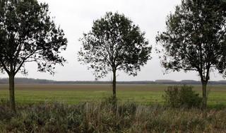 Almere is de oplossing voor onze woningnood, maar niemand ziet het | opinie