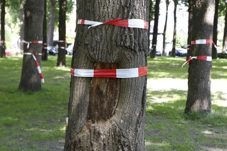 Juli 2020: protesten tegen bomenkap op de Brink.