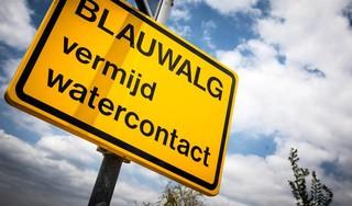 Lekker plonzen tijdens de komende hittegolf? Bij deze drie zwemplekken in de omgeving van Haarlem moet je oppassen voor blauwalg