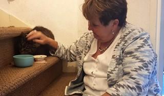 Kat Merlijn terug na 13 jaar: het belang van huisdieren chippen wordt maar weer eens aangetoond