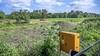 Met hoop gekraak valt een boom, een grijper pakt 'm in zijn nekvel: er komen villa's naast de Ruïne van Brederode