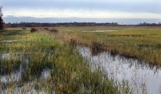 Plannen die het Naardermeer moeten 'vernatten' komen ter inzage