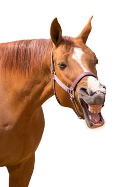 Een gegeven paard... Maar toch
