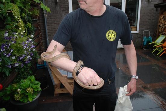 Slang gevonden in Haarlemse achtertuin [update]
