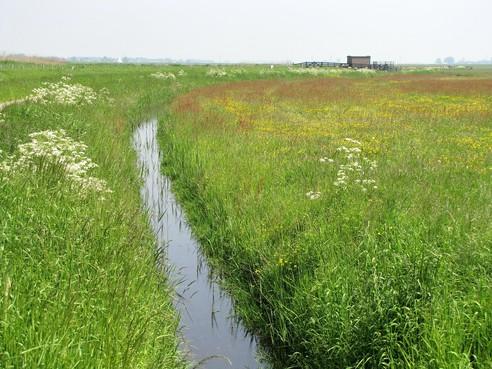 Agrariërs en natuurorganisaties strijden samen voor meer biodiversiteit, plan kost provincie 90 miljoen euro