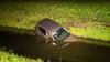 Automobilist verliest macht over het stuur en raakt te water in Rijsenhout