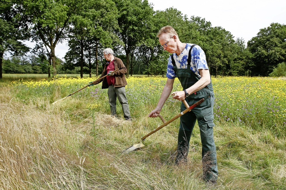 Het grasveld in het Cronebos wordt onder handen genomen met de vlijmscherpe zeis.