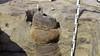 Archeologen vinden mysterieuze pottenstapel uit Romeinse tijd. De potten hebben geen bodem: 'Ze dienden vermoedelijk als een waterput'