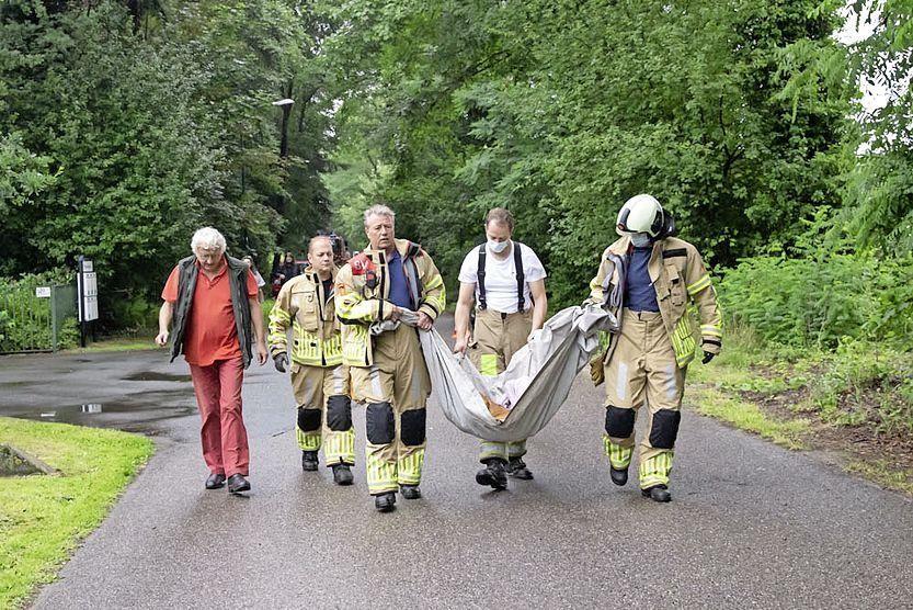 Teus van Vulpen brengt samen met brandweerlieden de ree naar een bosgebied.