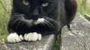 Gijs scharrelt niet meer over Crailoo, bekende kat doodgereden in Hilversum: 'Het plan is om zijn as boven de natuurbrug uit te strooien'