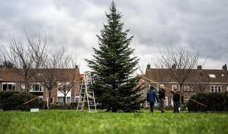 En hij staat! Het Batavierenplantsoen in Haarlem-Noord heeft weer een kerstboom [video]