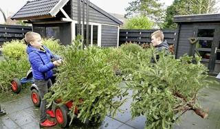 Drie vragen aan Spaarnelanden over de aangepaste inzameling van kerstbomen dit jaar: 'Kinderinzameling gaat jammer genoeg niet door'