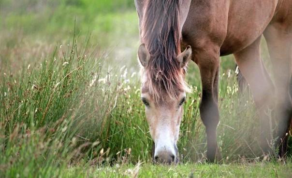 Organisatie Dorpsfeest Santpoort geeft adviezen vanwege besmettelijke paardenziekte