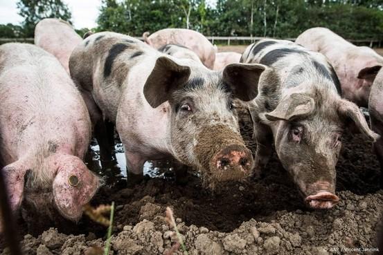 Nederland mag boeren uitkopen van Brussel